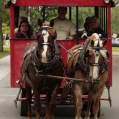 Guests use Horse and wagon to travel through community